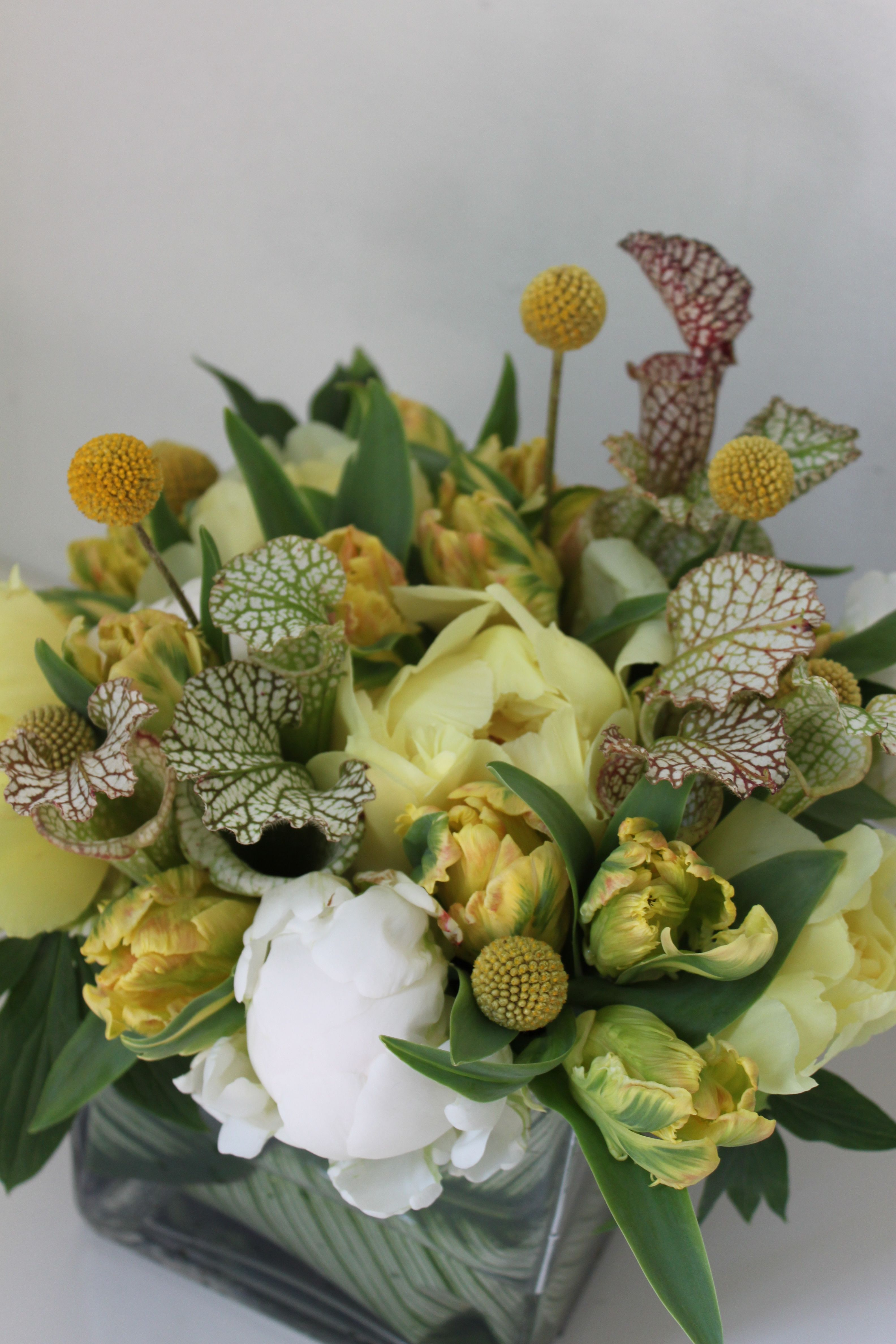 yellow tree peony, parrot tulip, craspedia, white peony, sarracenia pitcher plant wedding flower bouquet, bridal bouquet, wedding flowers, add pic source on comment and we will update it. www.myfloweraffair.com can create this beautiful wedding flower look.