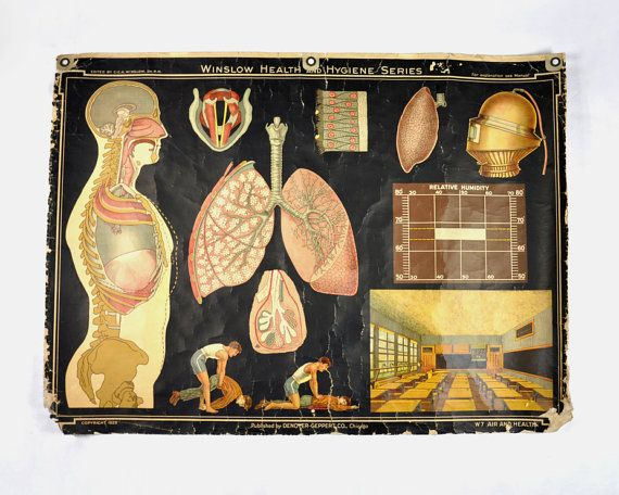 Stuff We Love Vintage Medical Charts, The Winslow Health and - medical charts