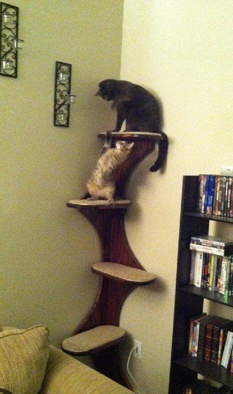 Corner Climbing Cat Tree Tower For Active Kitties, UNFINISHED  Only. Real  Furniture-grade Oak Ply by Theculturedcat on Etsy https://www.etsy.com/listing/169018400/corner-climbing-cat-tree-tower-for