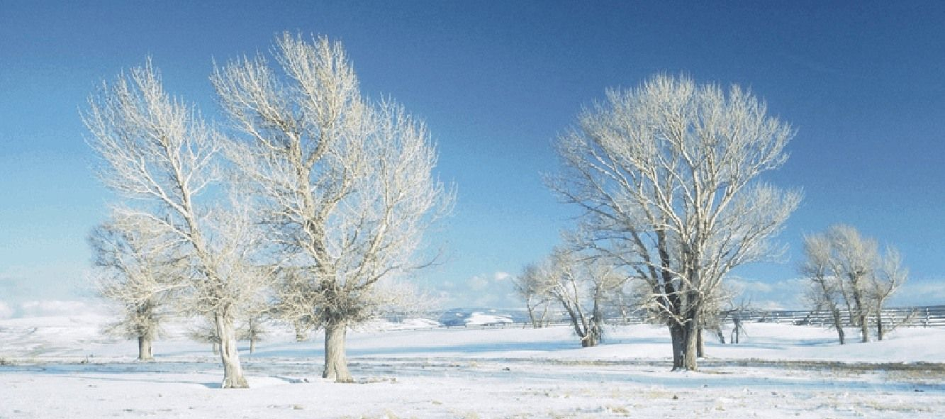 talvipuut
