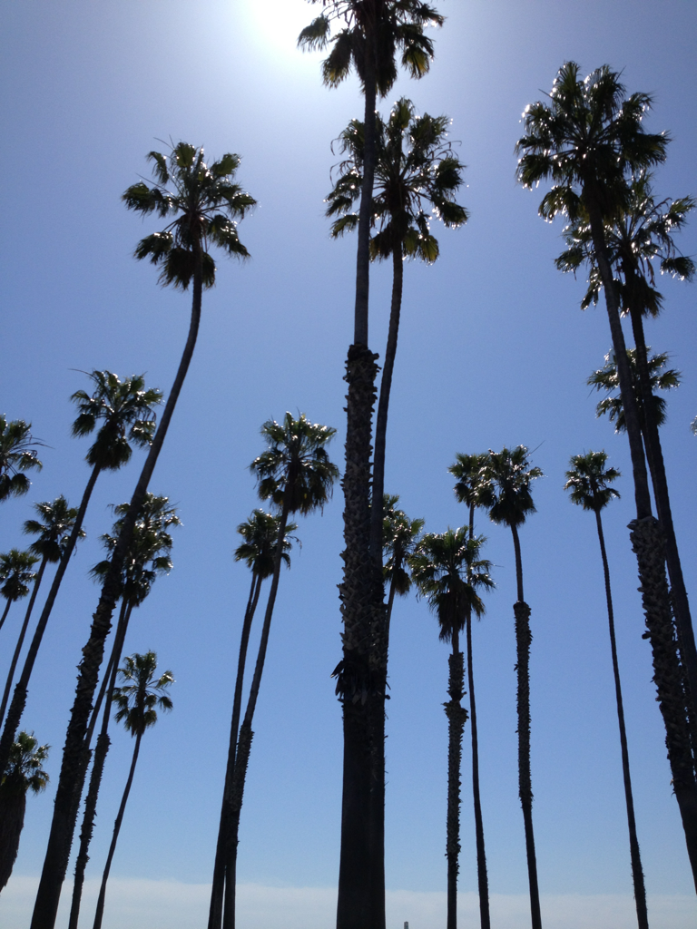 palm trees tumblr vertical. My Daily View Palm Trees Tumblr Vertical R
