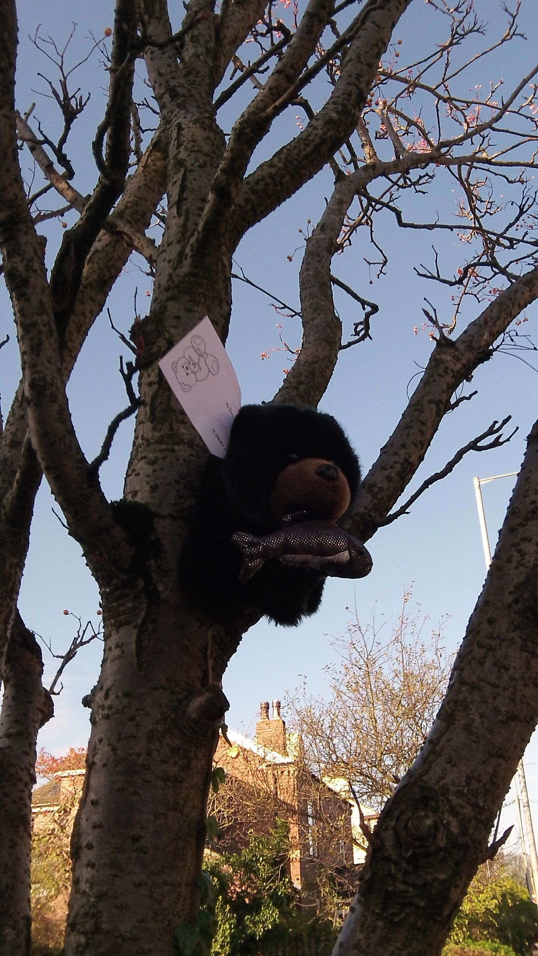Oh Dear Hope This Bear Didn T Get Stuck Up The Tree