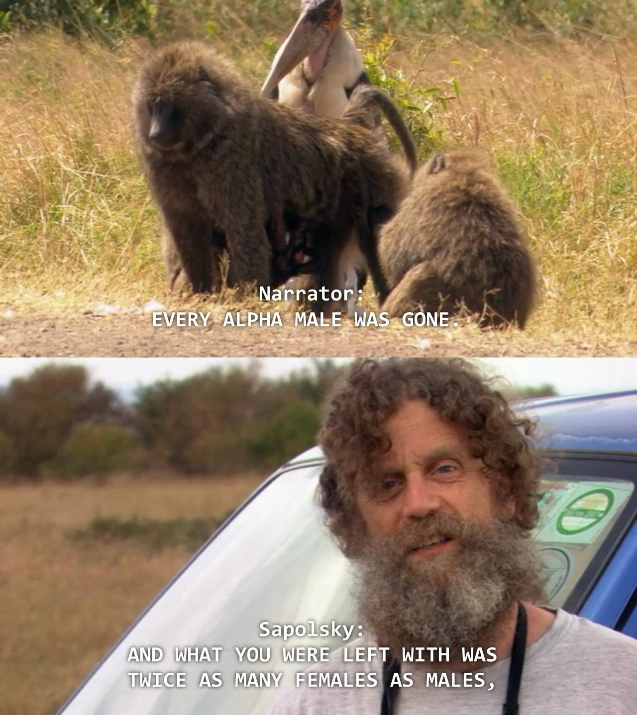 Dr Robert Sapolsky and the baboon troop.mp4 - YouTube