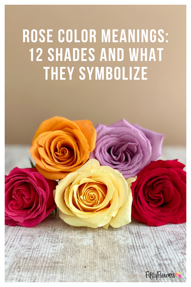 Rose Color Meanings 12 Shades and What They Symbolize