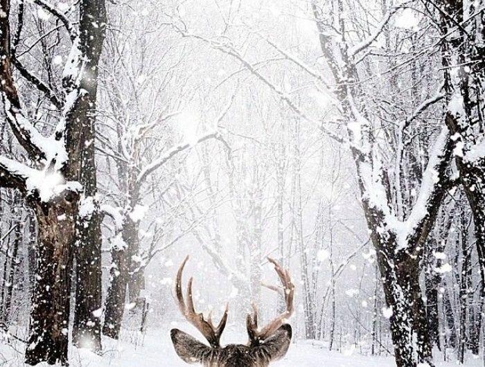 le paysage d 39 hiver en 80 images magnifiques snow and wallpaper. Black Bedroom Furniture Sets. Home Design Ideas
