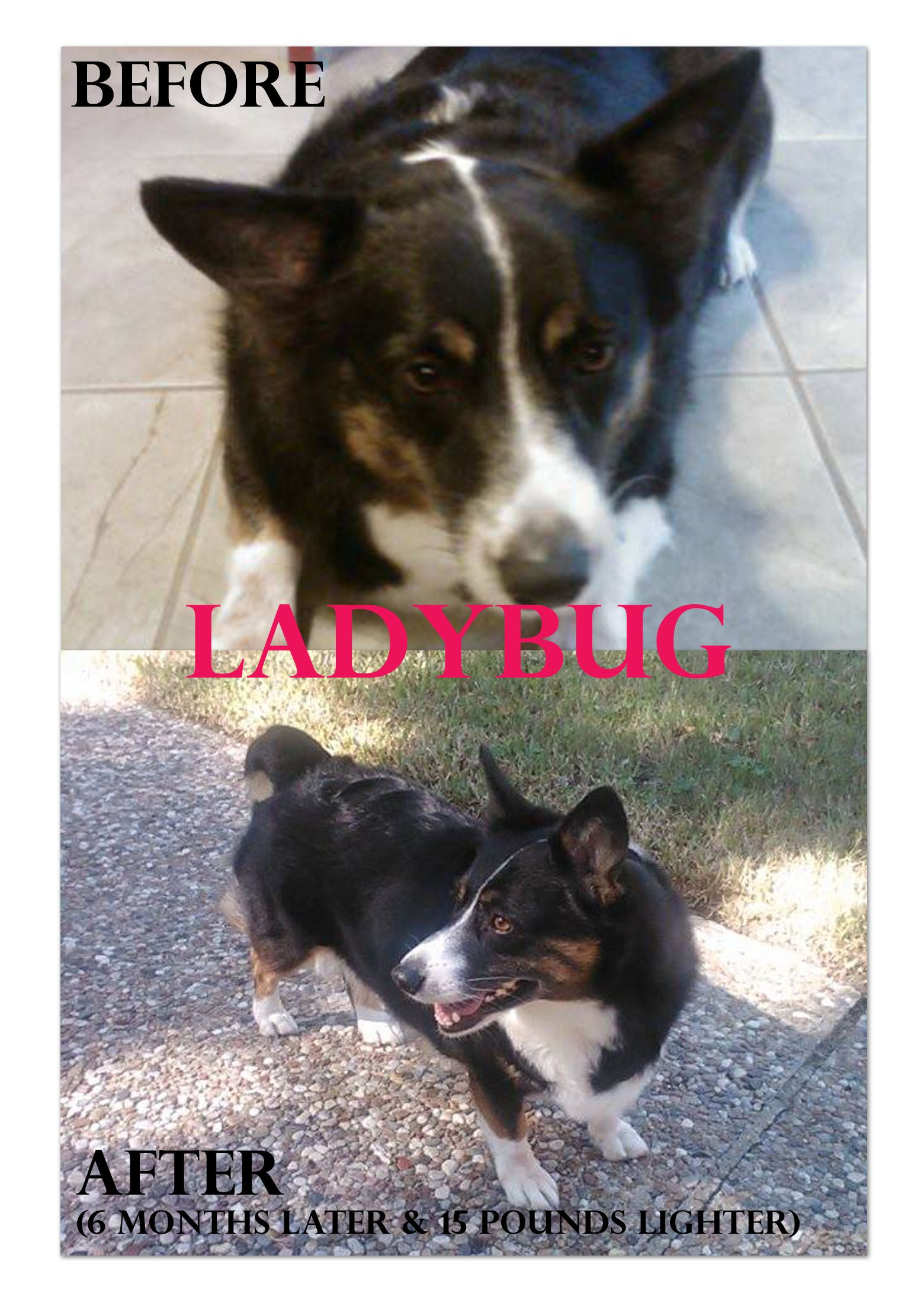 A Must Read Love Story From T G Hello I Adopted Ladybug From