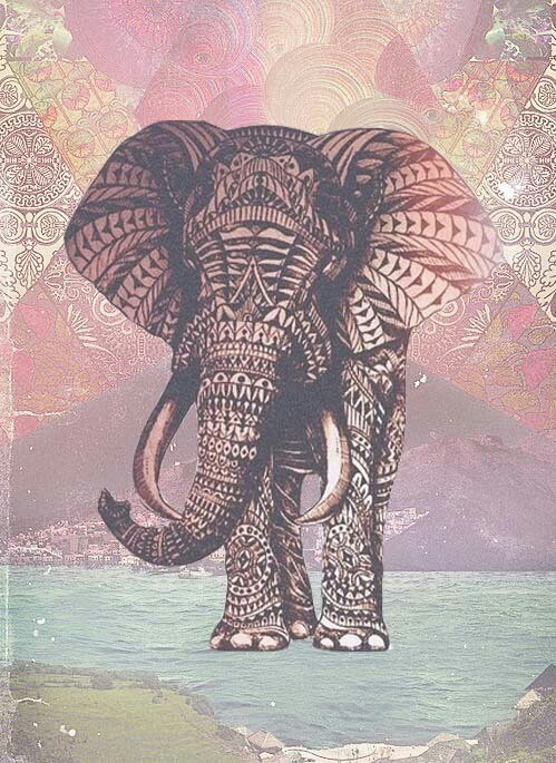 Elefante Wallpaper Phone Wallpapers Elephant Wallpaper Elephant
