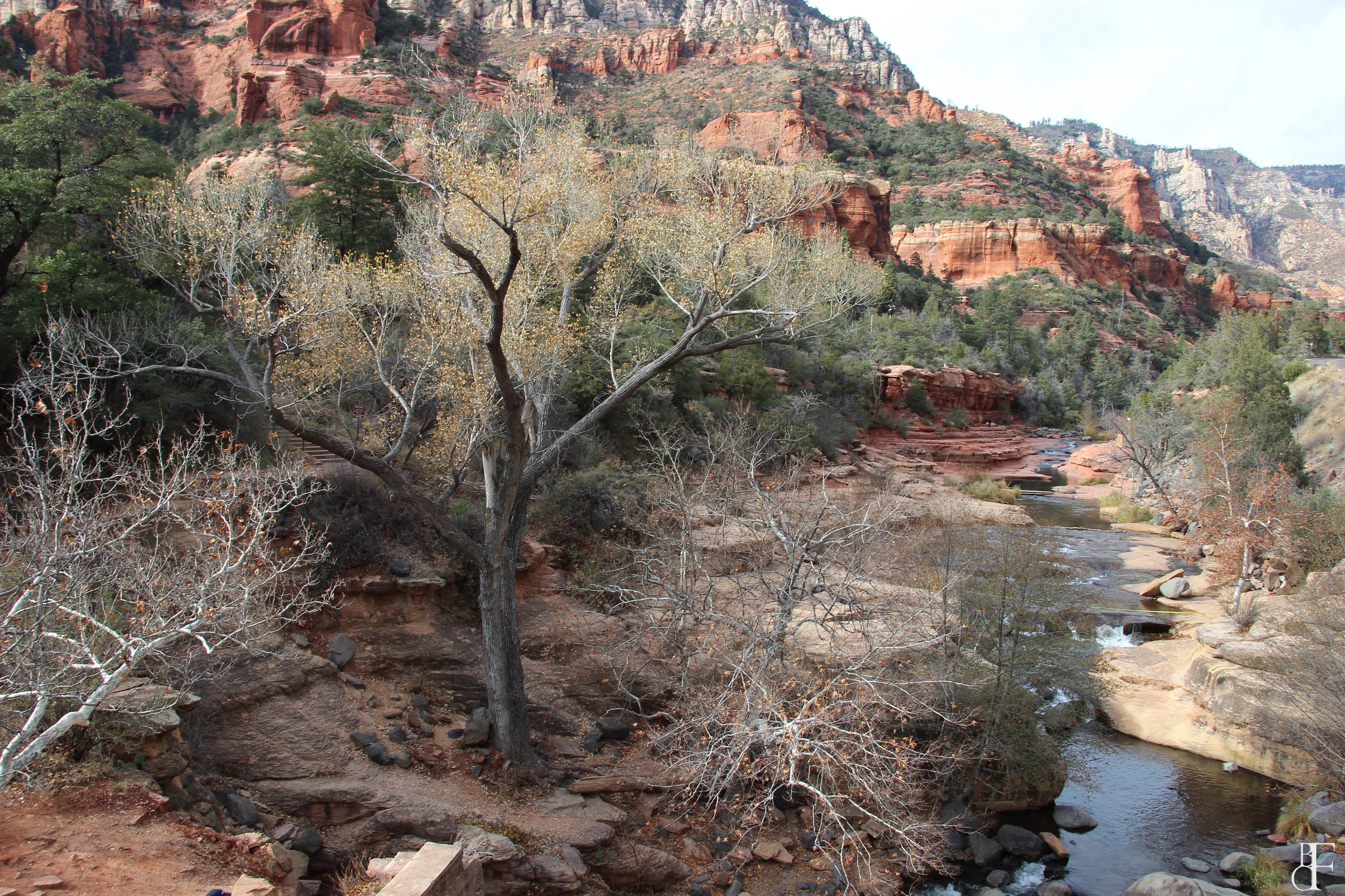 Oak Creek Canyon Arizona [5184x3456] [OC]