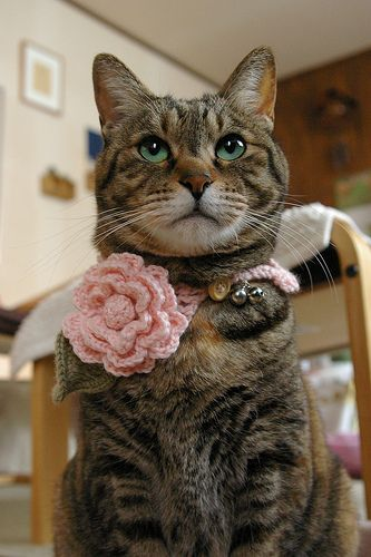 crochet - my two fav things: cute cat humiliation and the face that goes with it!