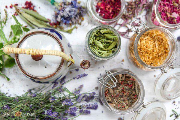 Photo of Grow a Healing Herbal Tea Garden – Garden Therapy