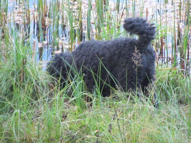 Blogi  OMAISAPU.fi      : Koira hoitaa kehoa ja sielua