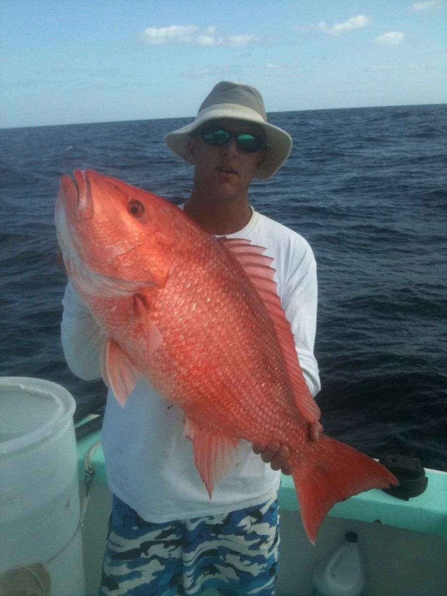 Snapper Fish Species | snapper there are many species of snapper but ...