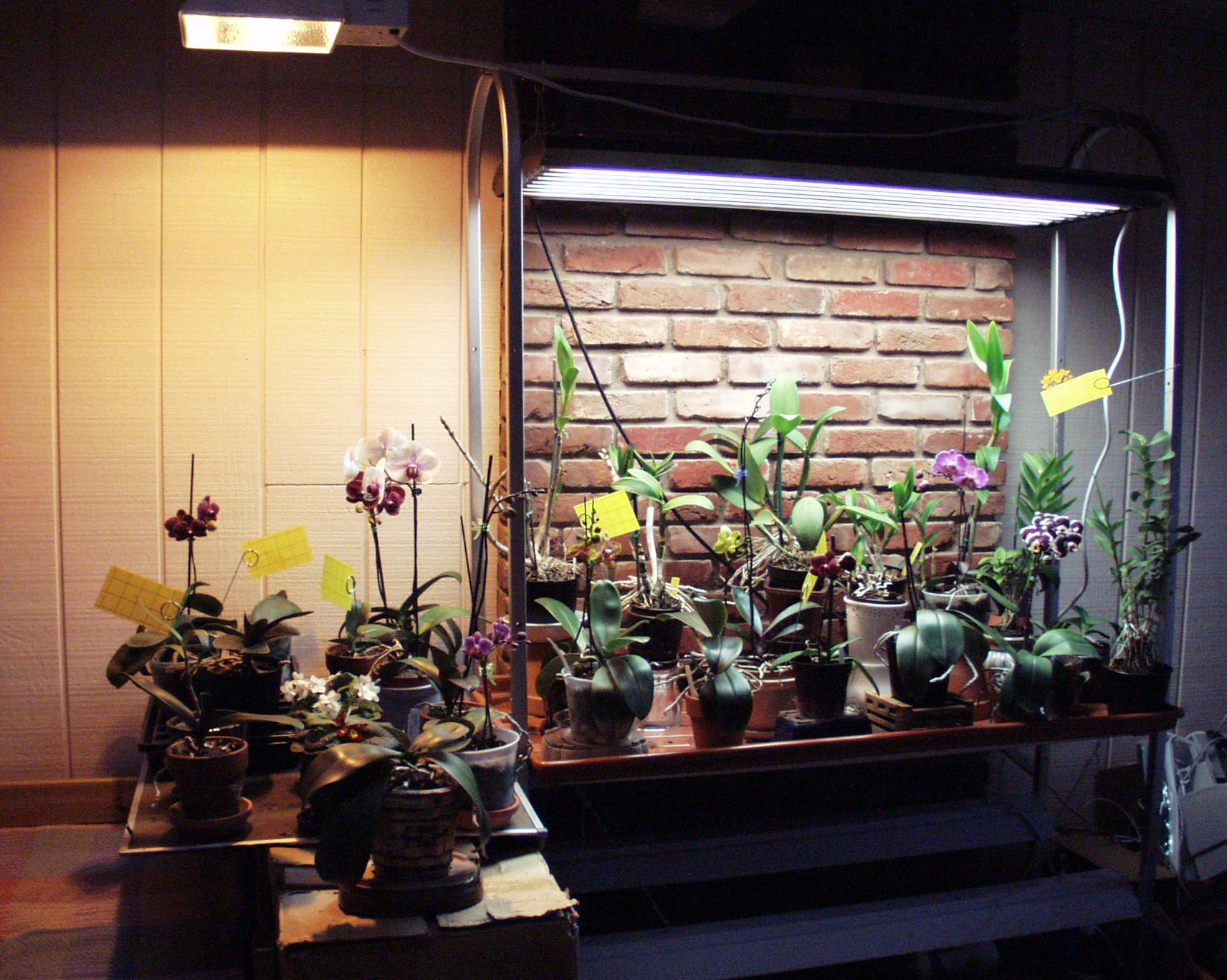 Orchid Collection Under T5 High Output Fluorescent And Hid 400 x 300