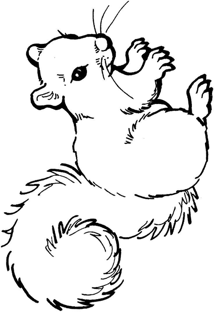 coloring page squirrel kids n fun - Squirrel Coloring Pages Printable