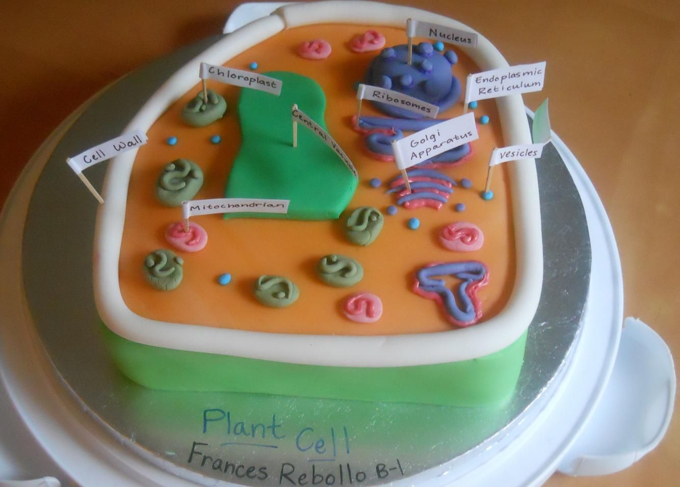 Plant cell model project cake
