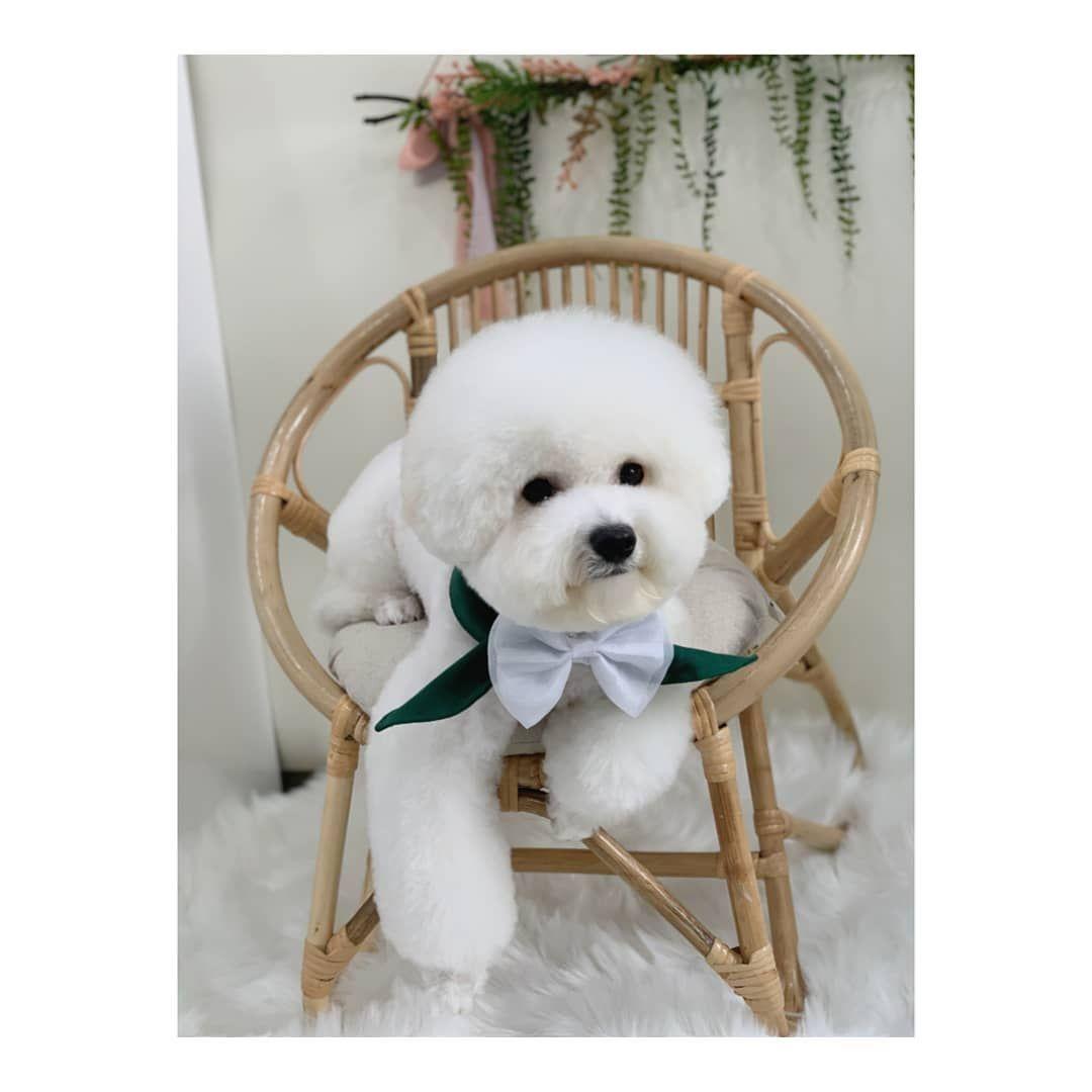 #루아_lua ... #dog #dogsofinstagram #dogs #puppy #dogstagram #instadog #pet #doglover #love #dogoftheday #cute #doglovers #instagram #pets #of #puppylove #doggo #puppies #cat #doglife #puppiesofinstagram #ilovemydog #dogsofinsta #animals #hund #doggy #petstagram #k #animal