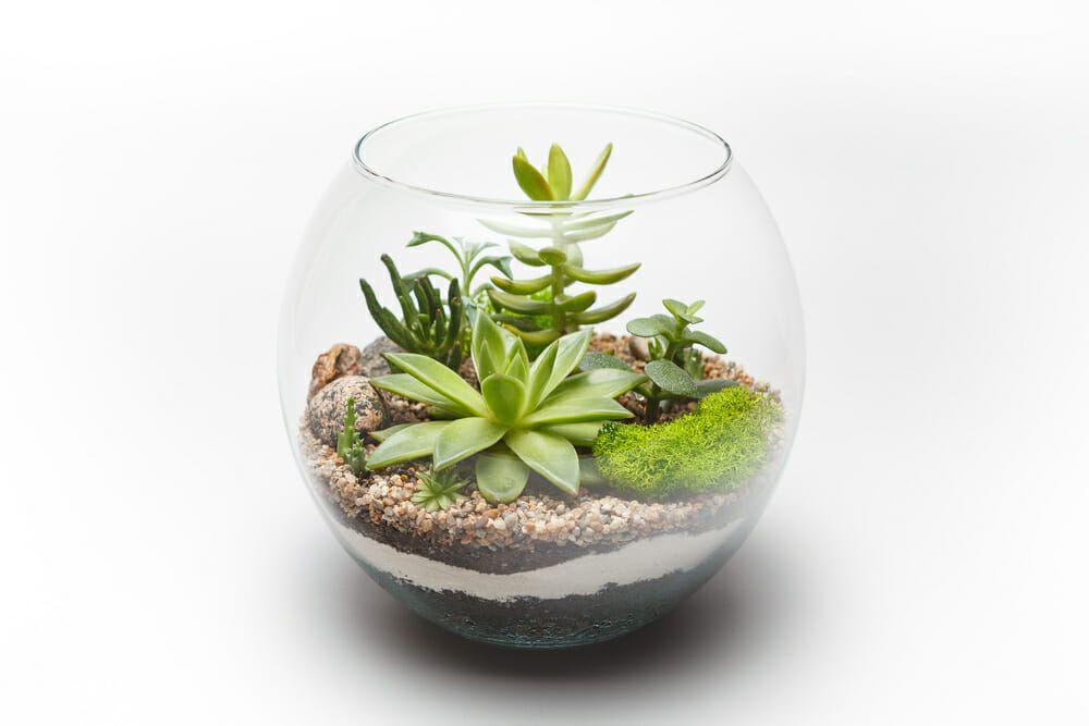 Terrarium: mini-giardino in vaso: consigli per cura e fai ...