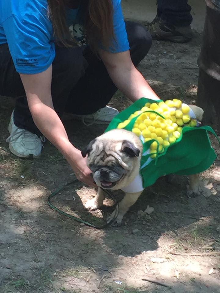 Frank wins Best Homemade Costume Contest-Corn Dog.