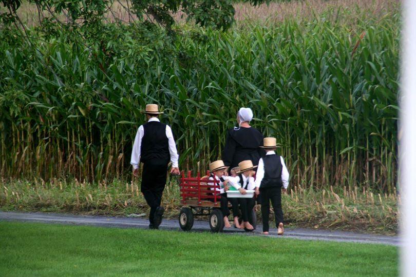 Amish - Wikipedia
