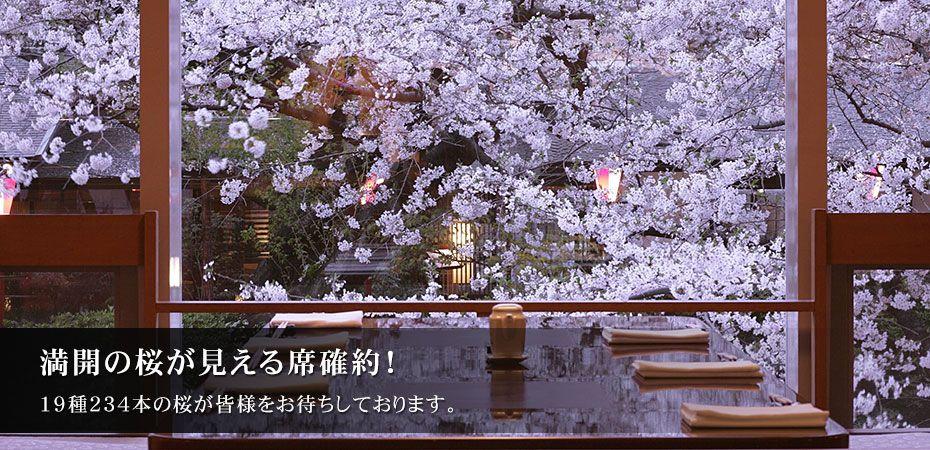 桜  庭園 イラスト - Google 検索