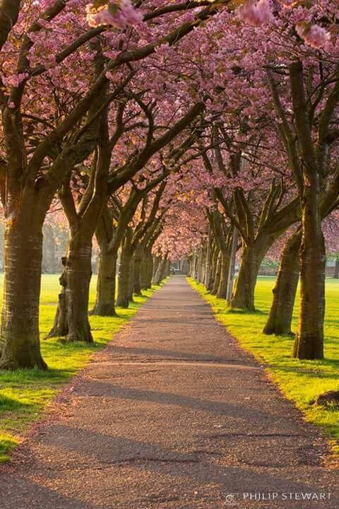 Meadows Blossom Edinburgh Scotland Travel Places To See Scotland