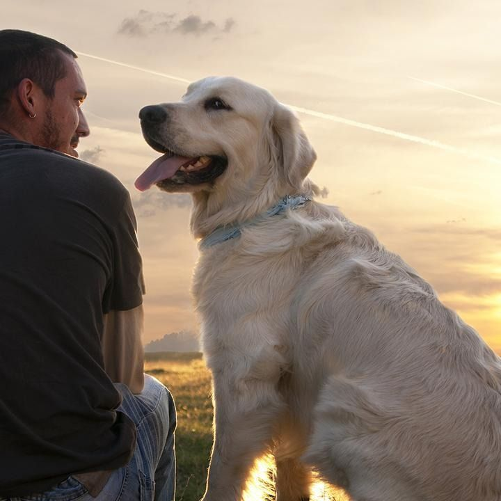 Check out these amazing stories of loyalty and friendship between people and their furry companions.