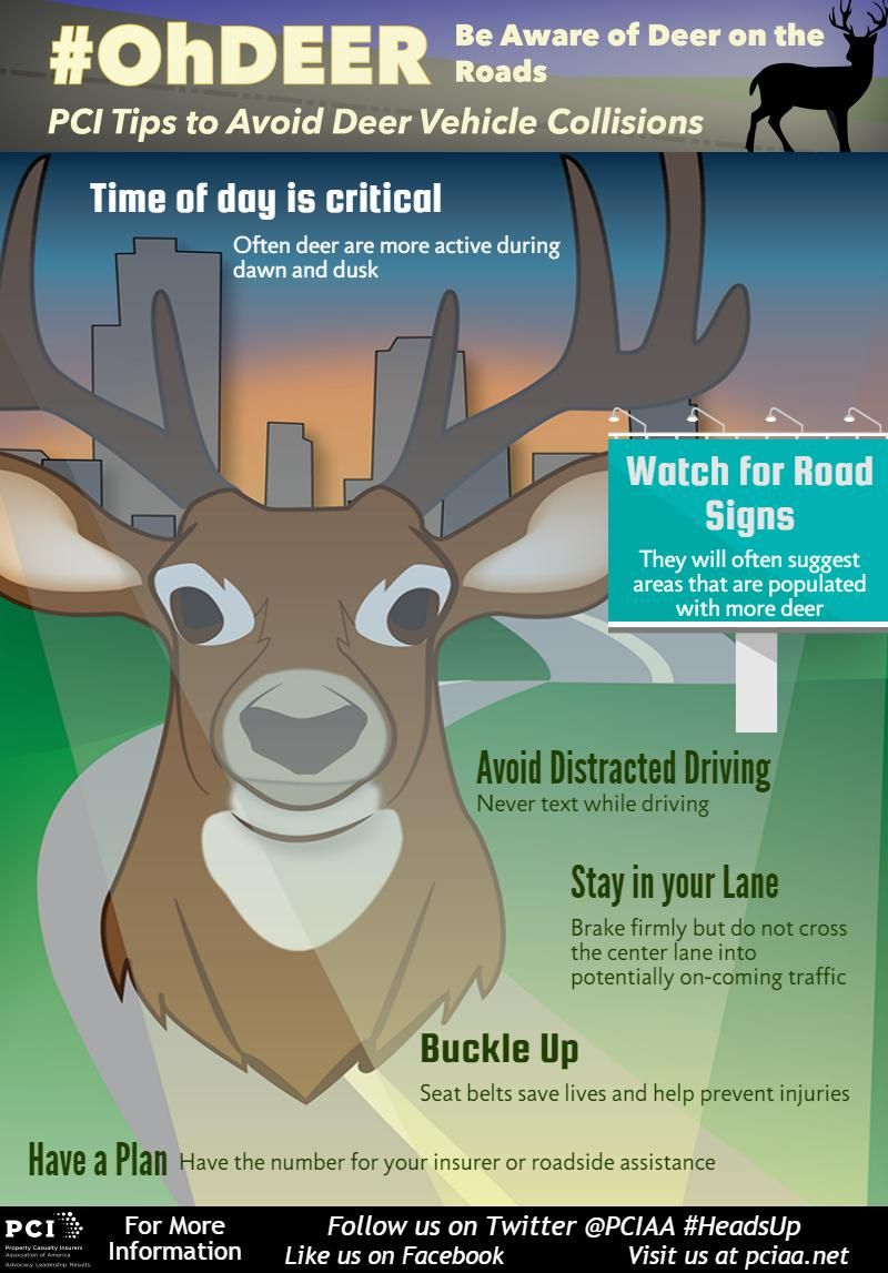 Oh Deer Traveling by yourself, Safe travel, Distracted