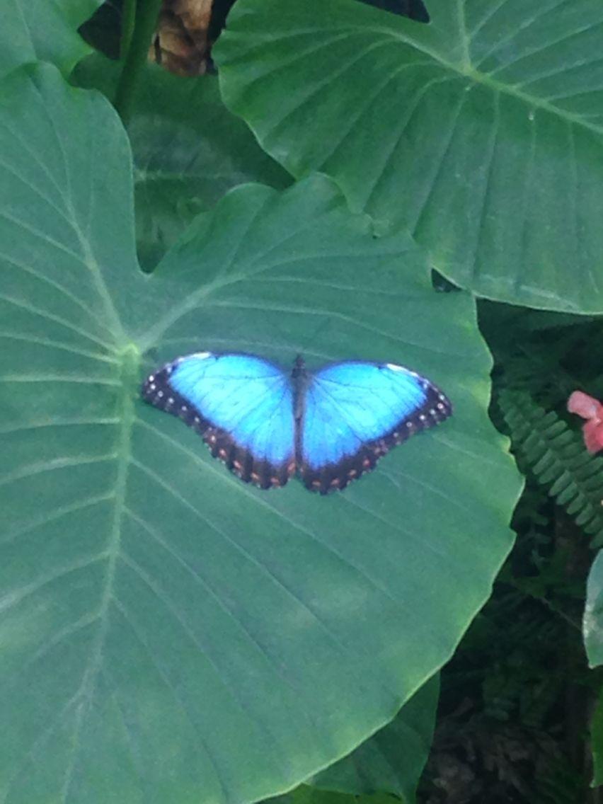 Butterfly Garden @ Calloway Gardens Georgia