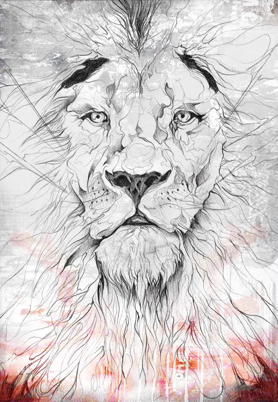 Lion Line Drawing with ColourPaper Size: 42x29.7cm/16.5x11.7inches ...