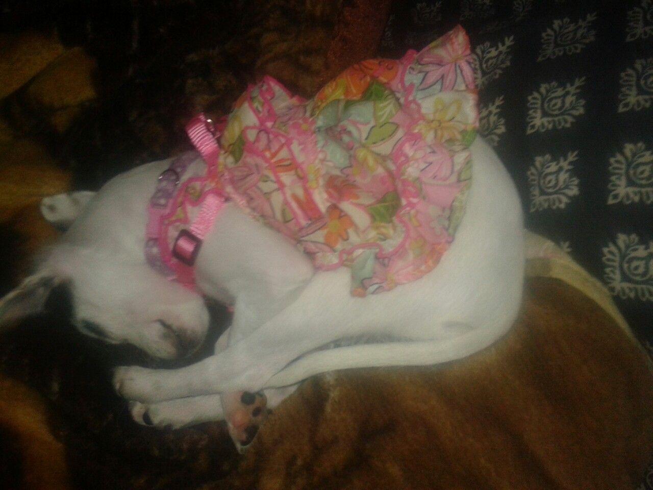 Even pretty girls sleep weird lol my wonderful pets pinterest