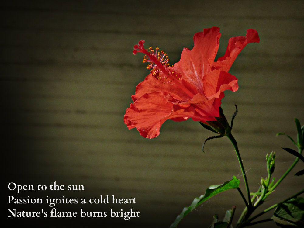 Open midnighthaiku Very short poems, Haiku, Nature