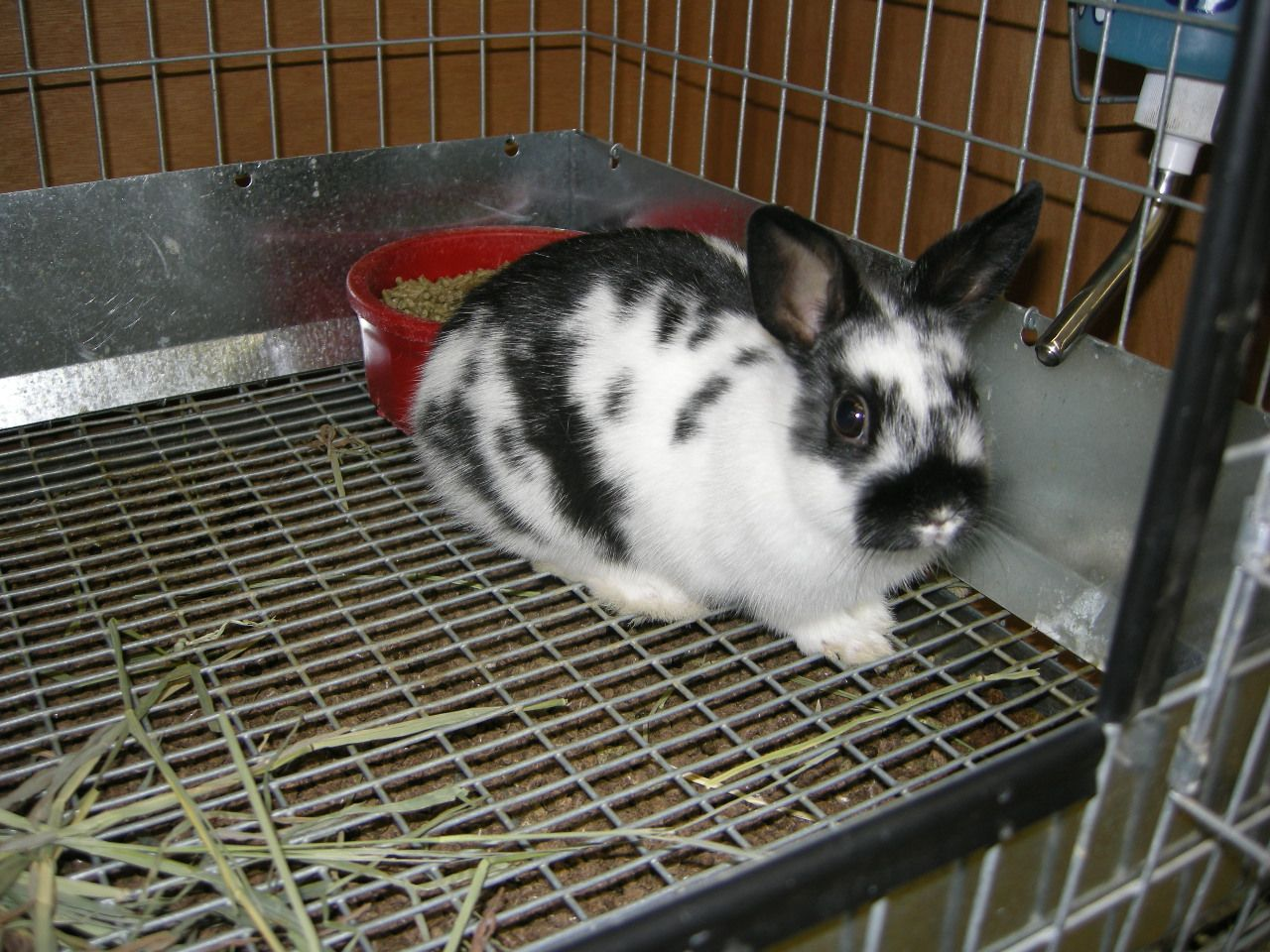 Eight years ago I found this little guy. I can hardly believe he is the same shy little bunny in this photo.