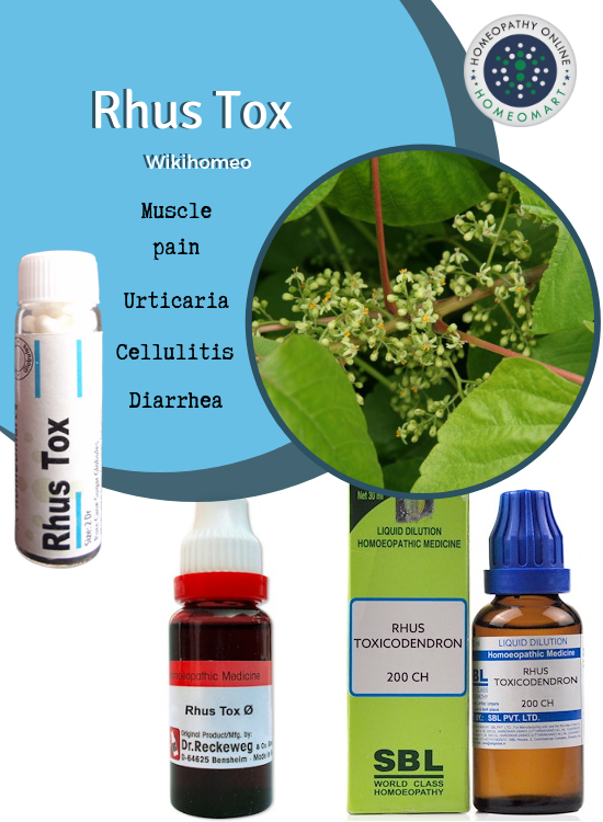 Compendious on Rhus Toxicodendron: Indications, Profile