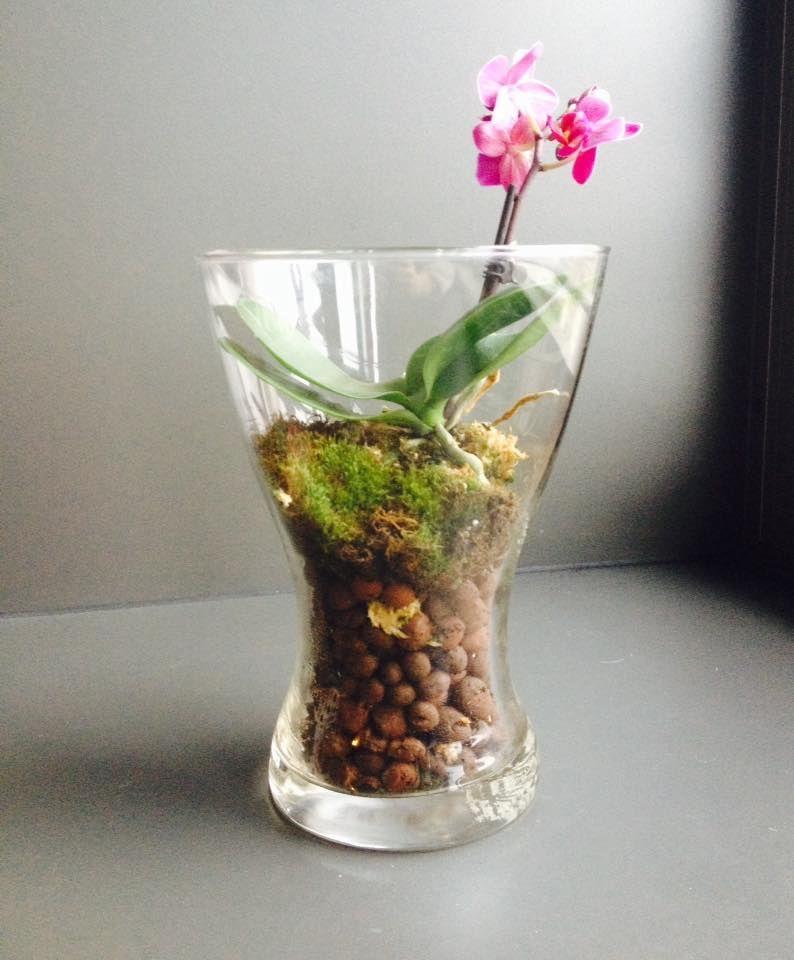 Orchidee Naine Lichen Billes D Argile Orchidee Bille Argile