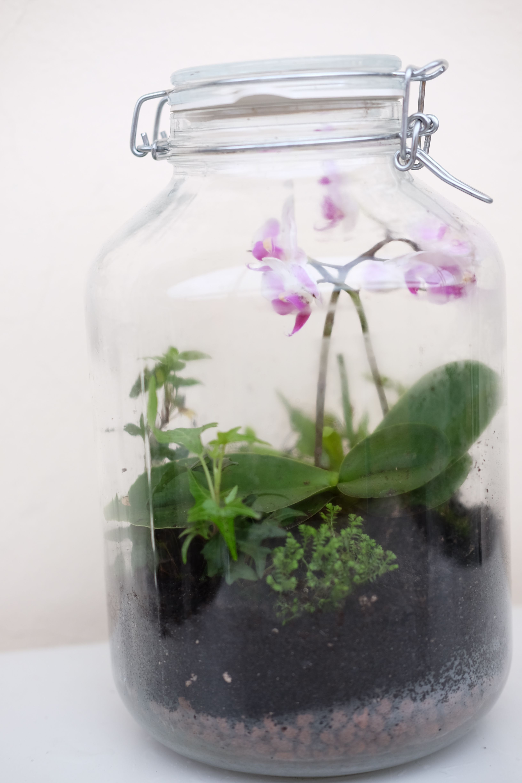 Flaschengarten Mit Orchideen, Venusfliegenfalle, Farnen, Moosen Und Efeu  Glass Garden, Miniature Gardens