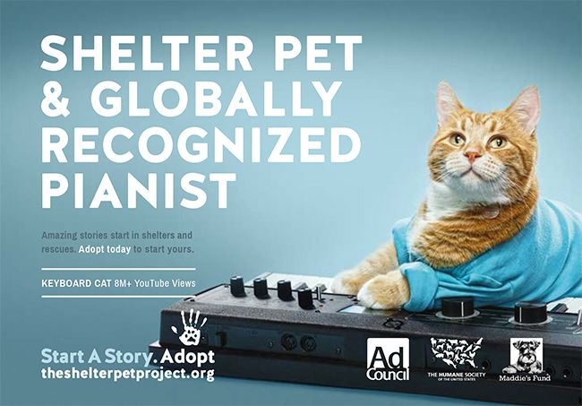 Get Inspired To Create Great Animal Rescue Marketing Materials With These Inspirational Designs That We Lo In 2020 The Shelter Pet Project Animal Projects Cat Adoption