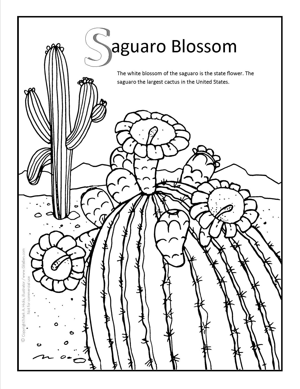 Saguaro Blossom Coloring page at GilaBen.com | Arizona Coloring ...