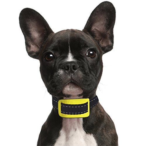 Our K9 Yellow Pet Safe Dog Bark Collar Durable Training Http Www Amazon Com Dp B011gaxy0u Ref C Small Dog Bark Collar Aggressive Dog Dog Training Collar