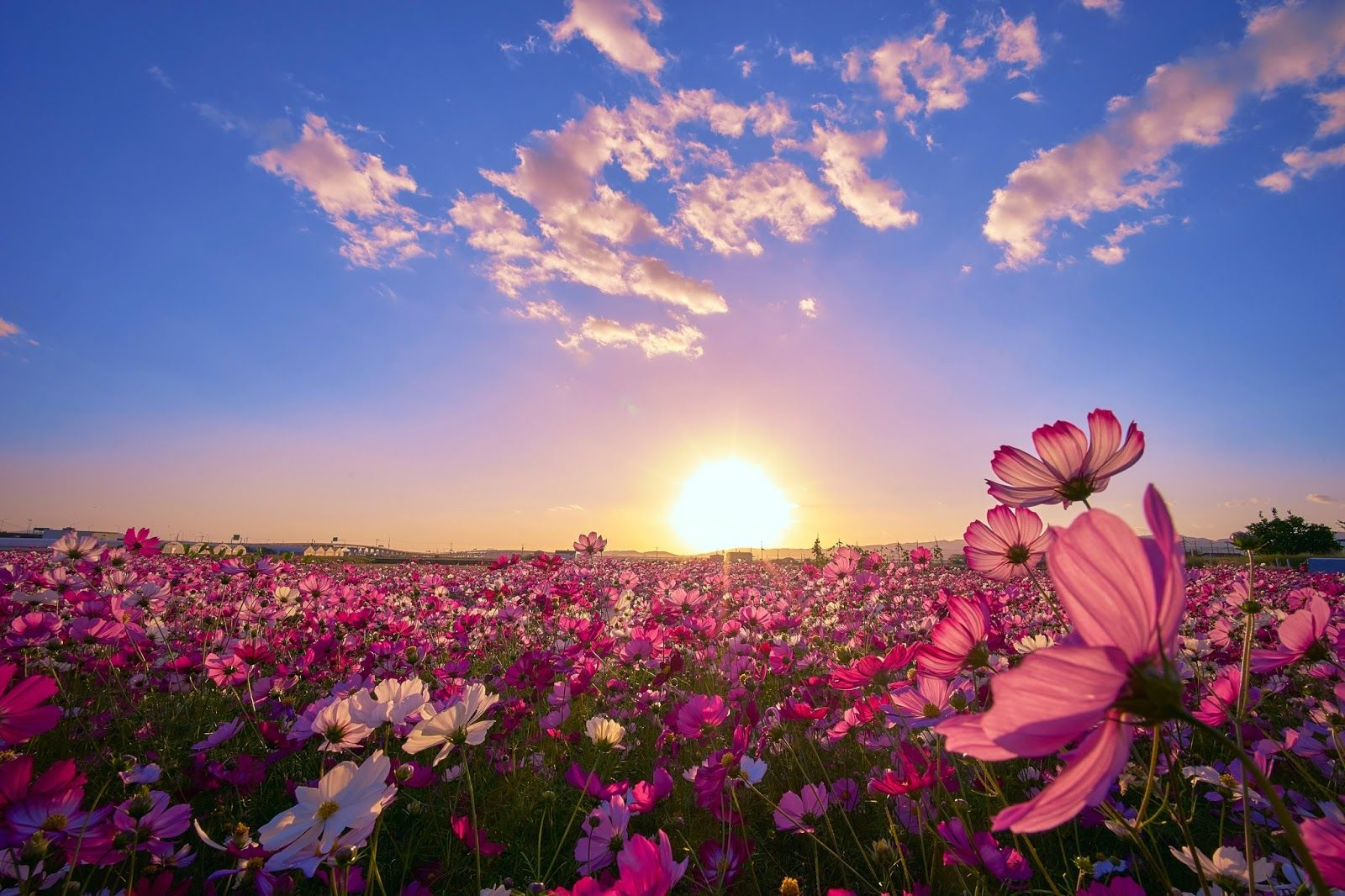 BANCO DE IMÁGENES: Hermoso campo con flores al amanecer