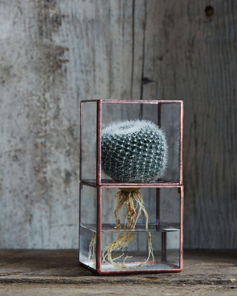 Hydro Terrarium - Small – Nalata Nalata