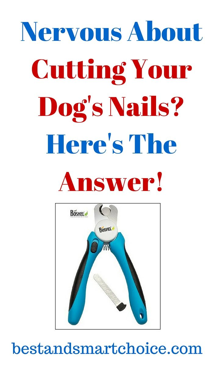 These are nail clippers that will allow dog owners to effortlessly groom their pets' nails from the safety and comfort... continue reading by clicking here... --> http://bestandsmartchoice.com/2015/09/nervous-about-cutting-your-dogs-nails-heres-the-answer/