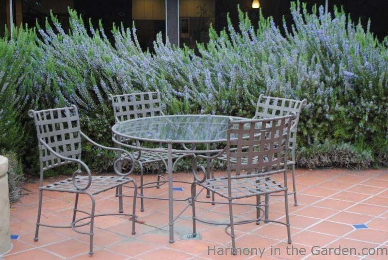 Rosemary no jardim - Fofocas no Jardim