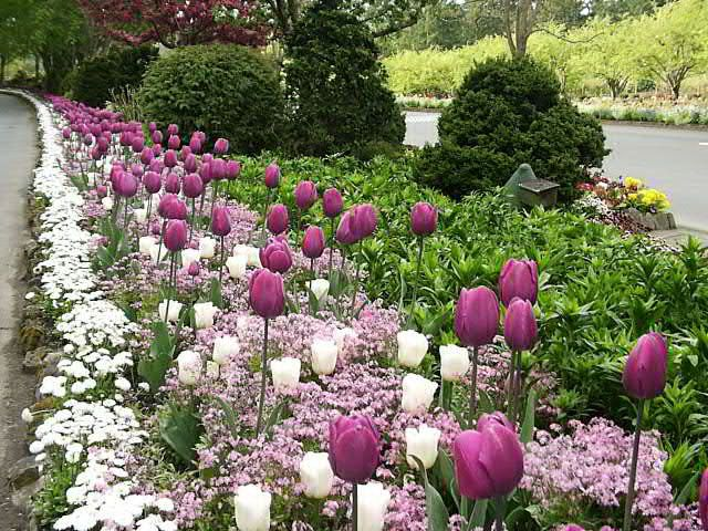 images about Bulb Garden on Pinterest Gardens Spring and