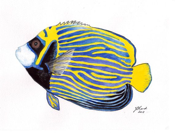 Watercolour Painting Study Of An Emperor Angelfish Original