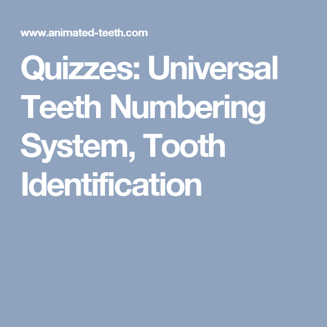 Quizzes Universal Teeth Numbering System Tooth Identification