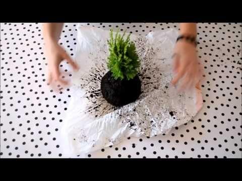 diy hanging kokedama japanese moss balls plant tutorial youtube m langer de l 39 argile et de. Black Bedroom Furniture Sets. Home Design Ideas