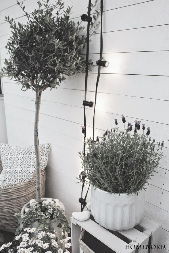 white wine box, lavender, olive tree and lamps! perfect!