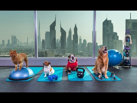 Pin By Hotels Around The World On Amazing Dubai Pet Hotel Pets Your Dog