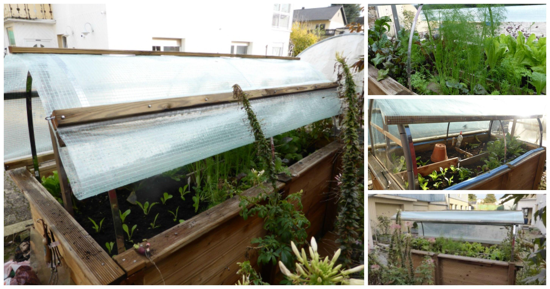 Vom Hochbeet Zum Mini Gewachshaus Dach Selber Bauen Hochbeet Hochbeet Selber Bauen Hochbeet Abdeckung