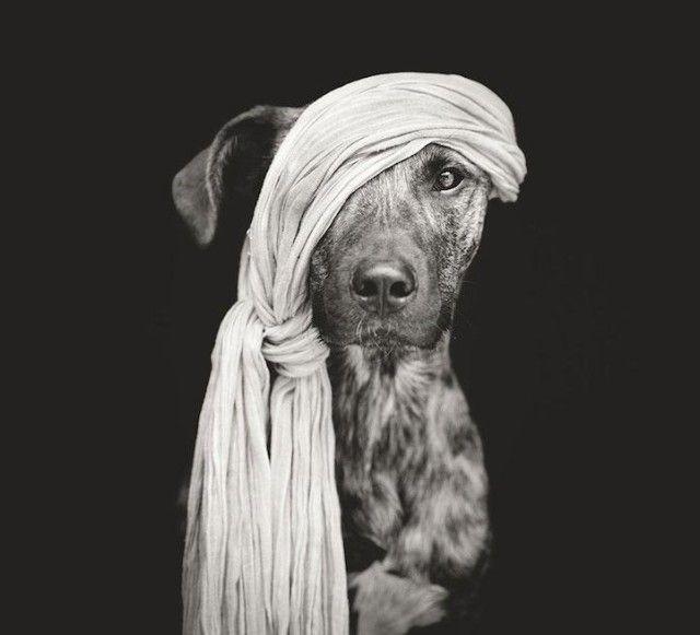 Expressive Playful Dog Portraits by Elke Vogelsang
